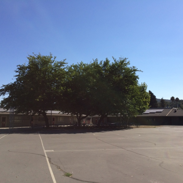 strawberry-elementary-school-7