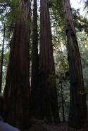 armstrong-redwood-grove-dec-2016-89