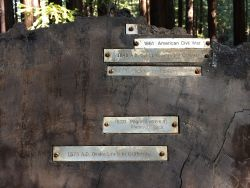 armstrong-redwood-grove-dec-2016-a-16